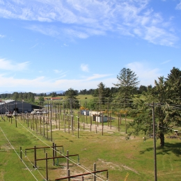 view of field with trees from powerline
